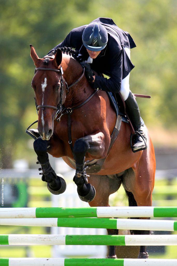 Selle de cheval et de poney, selle cso et d'obstacle pour l'equitation Antarès