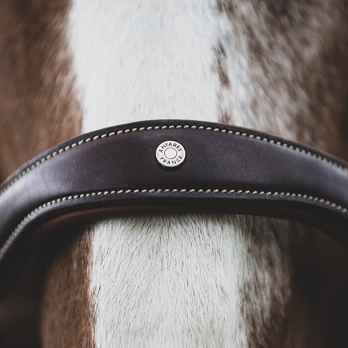 reins leather horse briddle antares horse saddle
